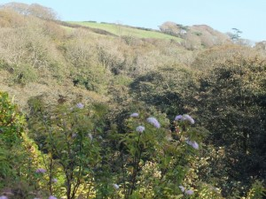 view from the patio boscastle
