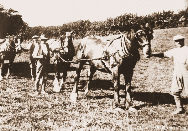 farming in the quantocks