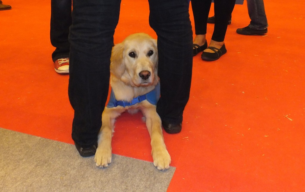 Poppy, a learner guide dog puppy