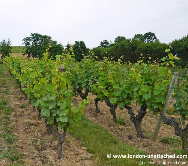 dinner in the vineyard Angers