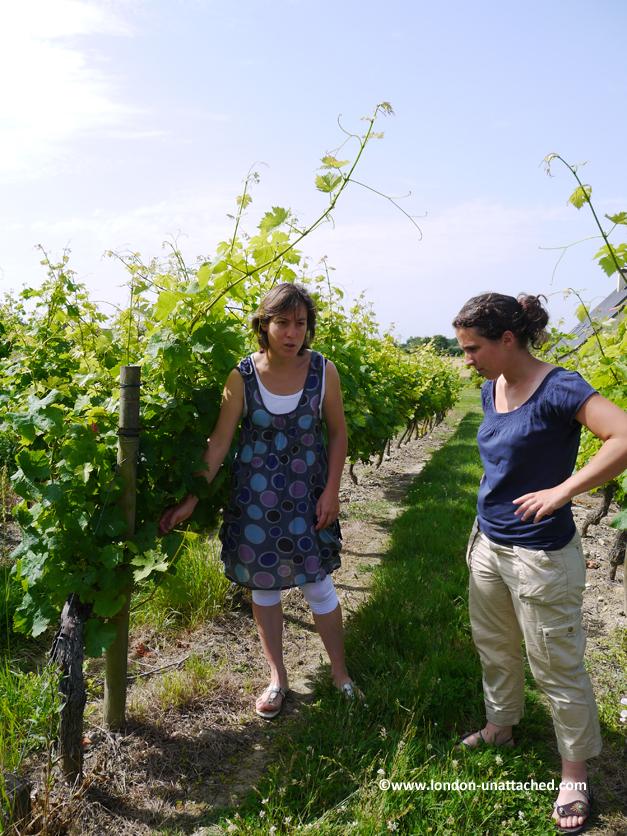 domaine de la tuffiere vineyard