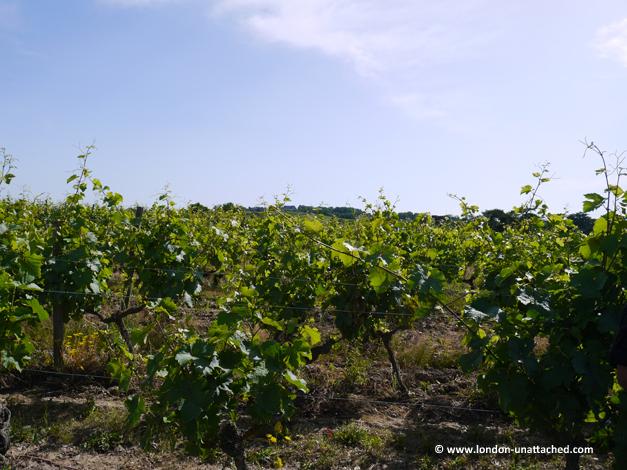 vines Chateau des vaults
