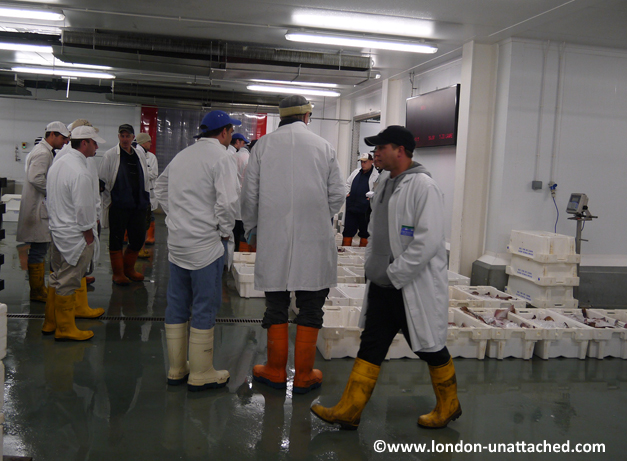 Brixham fish market auction
