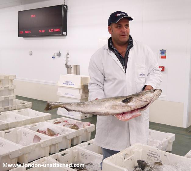 brixham fish market - pollock