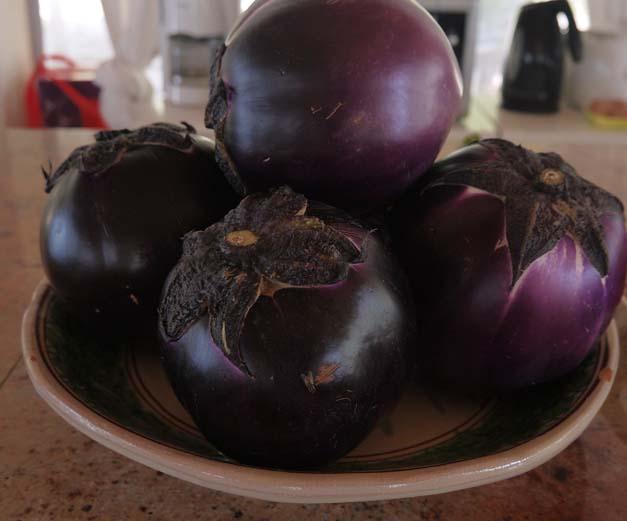 Sicily aubergine for Spaghetti alla Norma