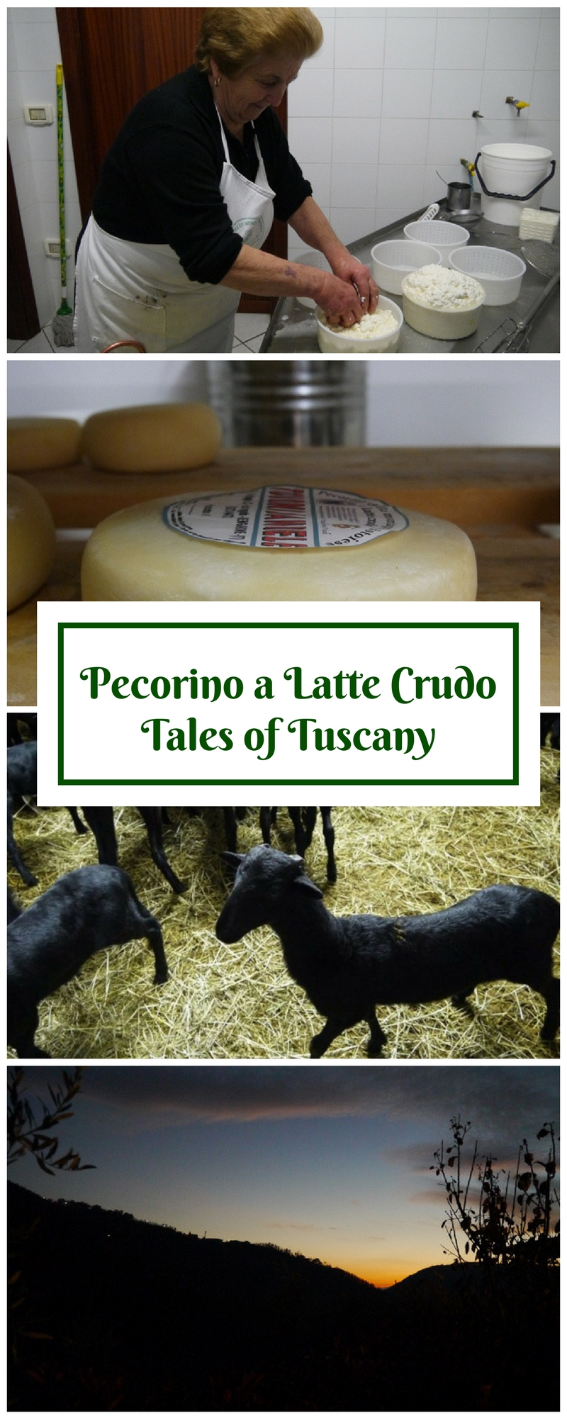 Tuscany Cheese Making -Pecorino a Latte Crudo - Sheeps Milk Cheese Tuscany - Slow Food Tuscany