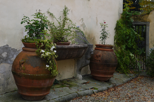 cappezana house plants