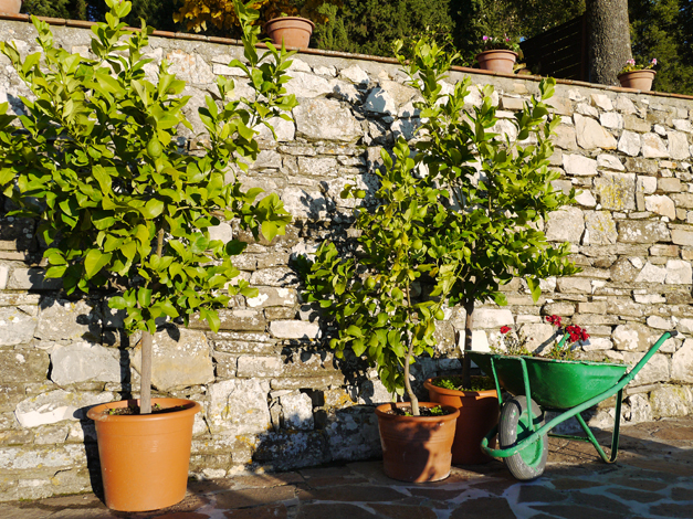 lemon trees il monte