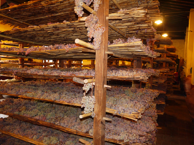 vin santo grapes drying 2