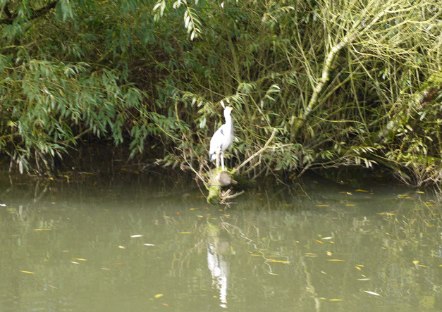 messing around on the river - heron