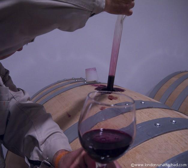 drawing wine - abruzzo