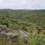 faia brava valley