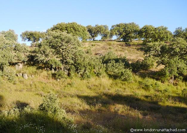 landscape herdade de Poupa