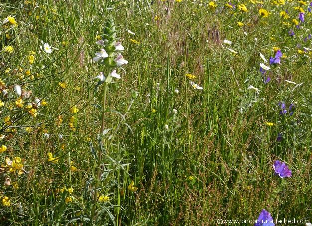 monsanto - wild flowers 2