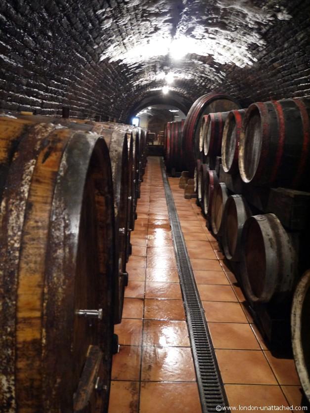 Baranja josic Cellars