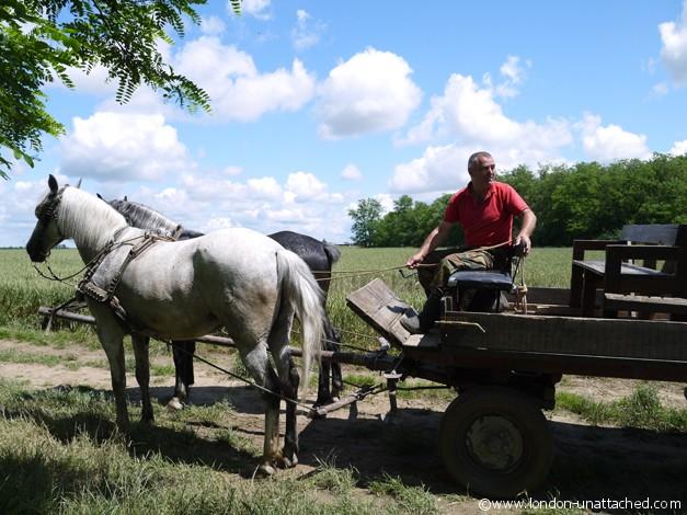 Farm Osijek