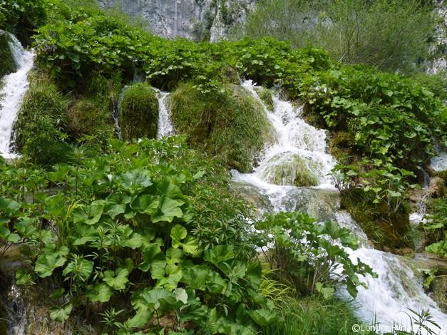 Plitvice Croatia - pre- calcification