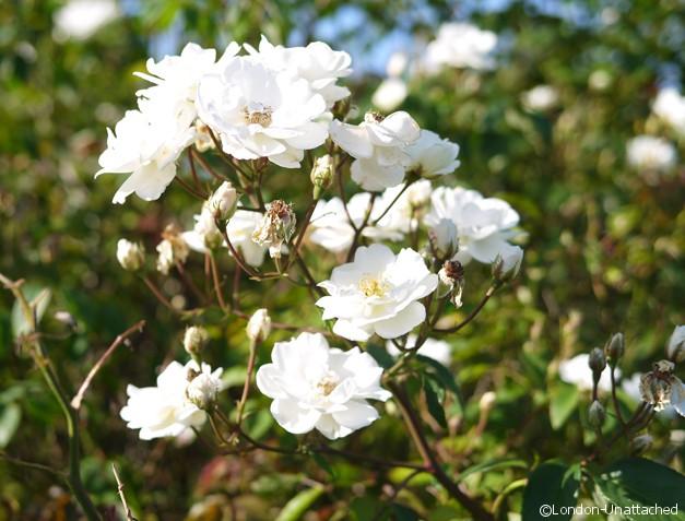 Flowers Glyndebourne