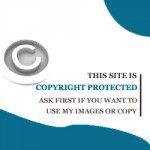 copy (1)