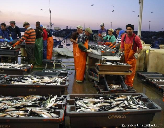 Fish Processing at Sines