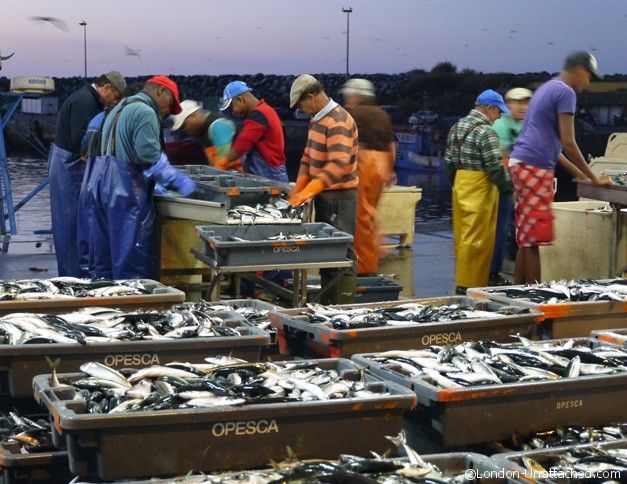 Sines - fish packers at work