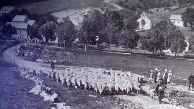 Transhumance - old photo