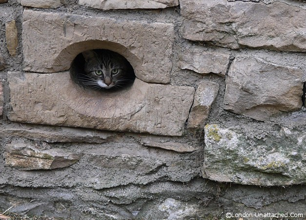 Cat Flap (ancient)