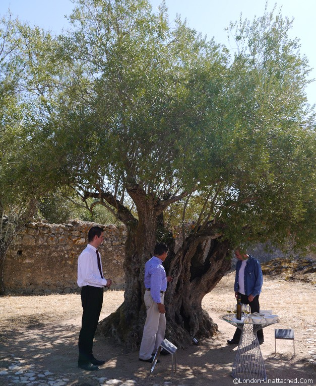 Convento - Old Olive Tree
