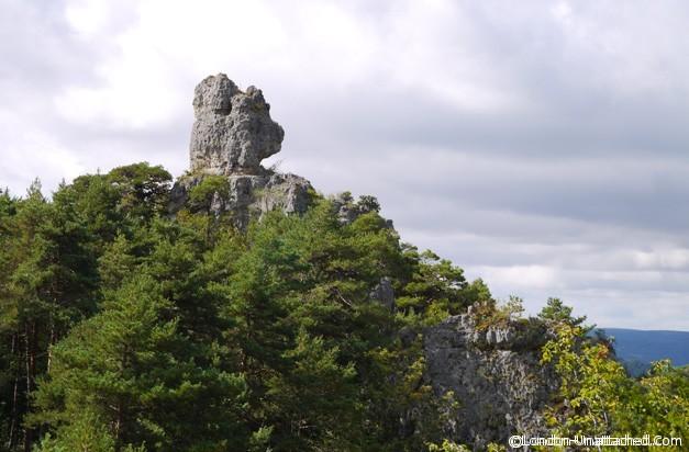 Causses et Cevennes - Bear