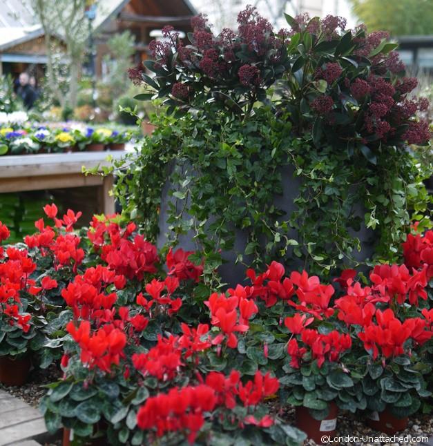 Clifton Nurseries Flowers