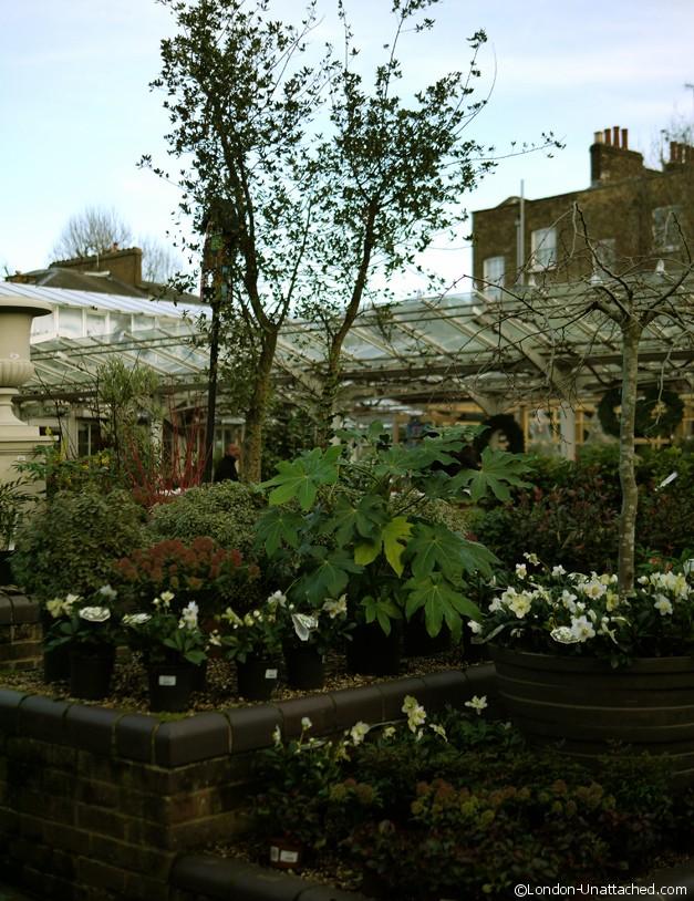 Clifton Nurseries - Plants