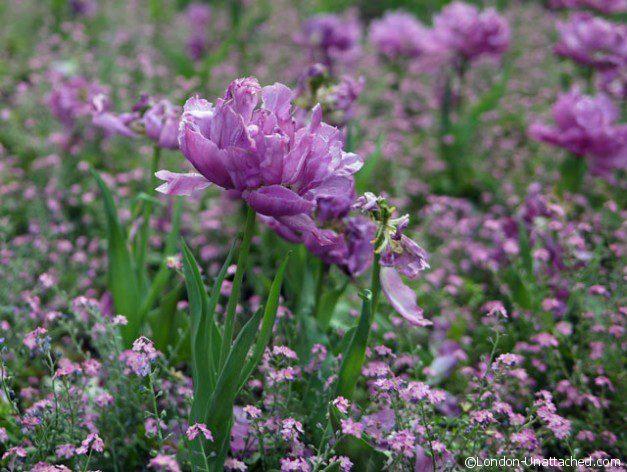 Soho Square Flowers