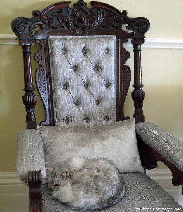 Bored Cat on throne