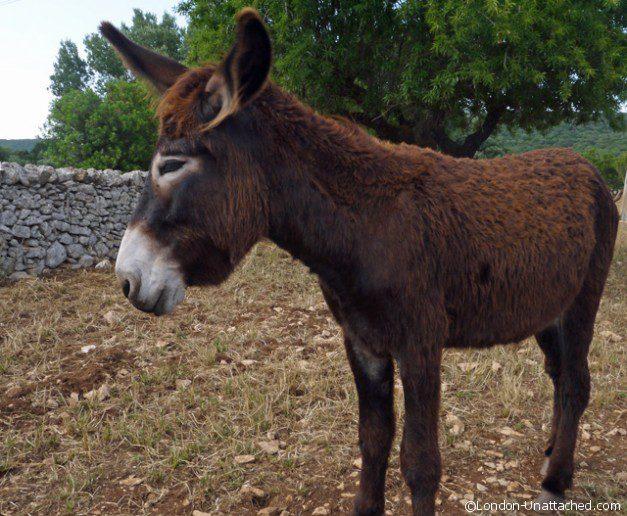 Donkey La Masseria Russoli in Crispiano