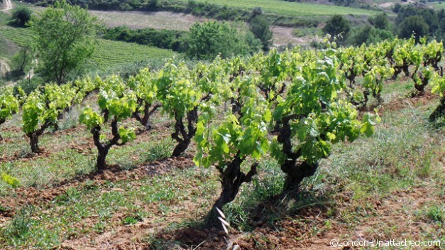 Vines, Traditional pruning