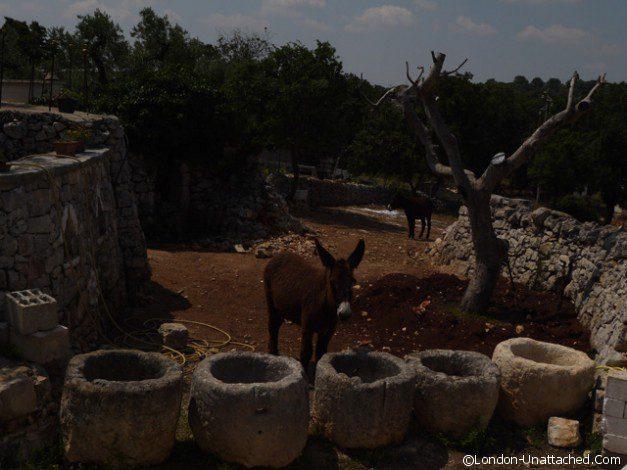 Masseria Il Frantolio donkeys