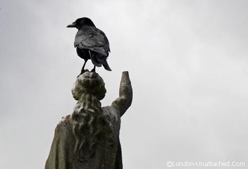 crow - Brompton Cemetery