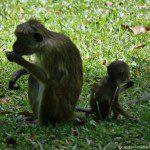 First Sights in Sri Lanka