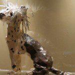 Fashion Dog Athenaeum hotel