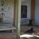 Geoffrey Bawas House - dog