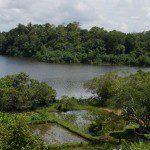 Geoffrey Bawas House - paddy fields