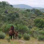 Faia Brava Horse with Foal
