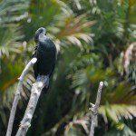 Sri Lanka River Boat Safari - bird