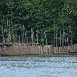 Sri Lanka River Boat Safari - estuary shrimps