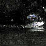 Sri Lanka River Boat Safari - river snake