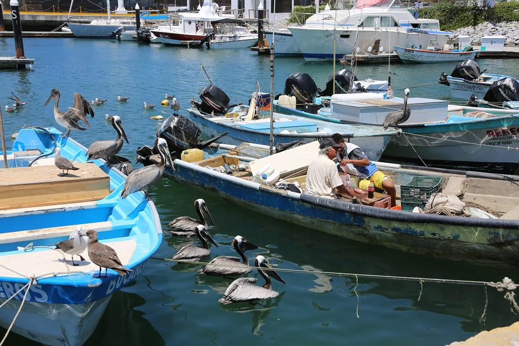 Fishing Boats in Nuevo Vallarta Harbour