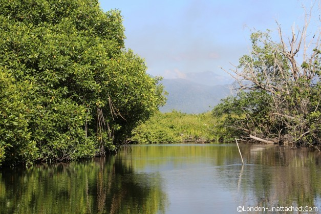 Mexico Mangroves