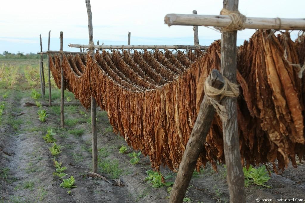 Mexico Riviera Nayarit Santiago Tobacco Drying