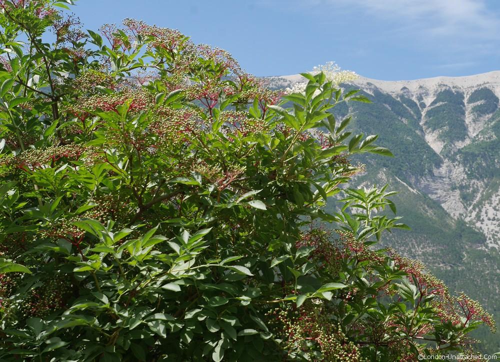Mont Ventoux near Brantes