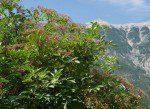 Terroir – Travels Through the Rhône Valley
